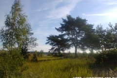 Природа Западного березового острова