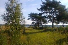 Западный березовый остров