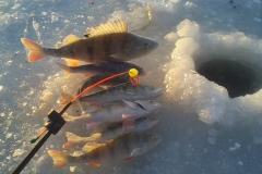 Зимняя рыбалка Бъеркезунд