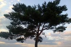 Природа на Большом Березовом острове