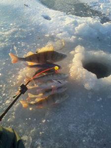 Рыбалка в Приморске