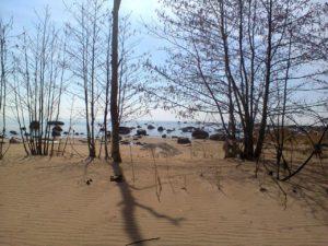 Западный березовый остров, южная часть.